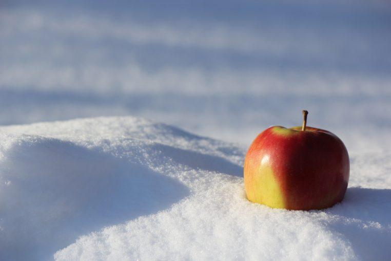 Alma a hóban
